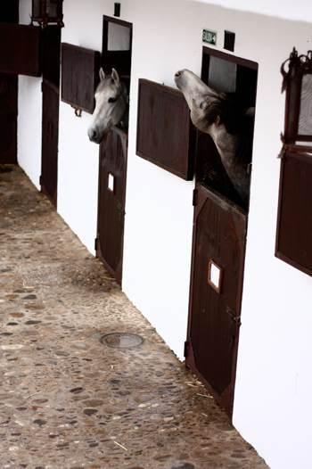 hest3.jpg