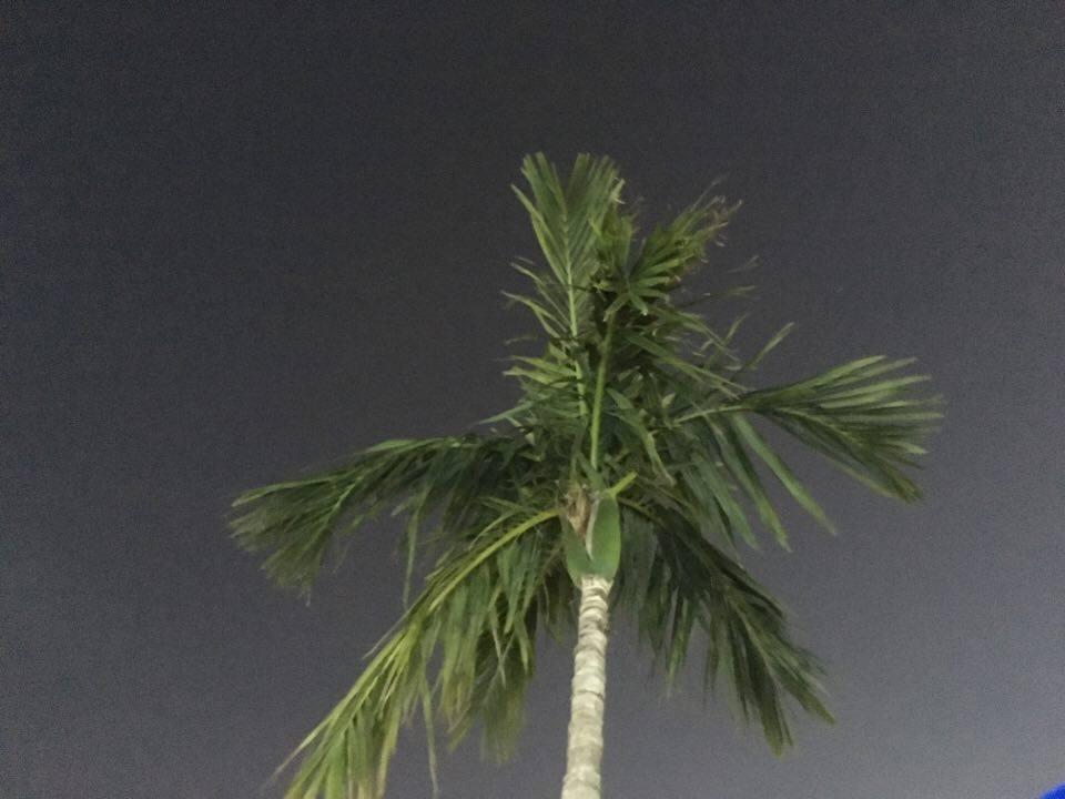 TAM:Palm