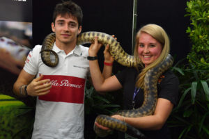 Charles Leclerc (MON) Alfa Romeo Sauber F1 Team with a GIant Python at Formula One World Championship, Rd1, Australian Grand Prix, Preparations, Melbourne, Australia, Thursday 22 March 2018.