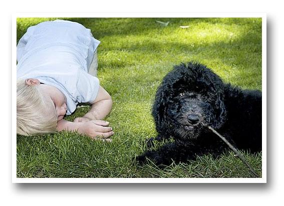 hund1.jpg