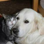 Som hund och katt?
