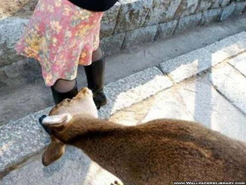 goat-wallpaper-funny-1