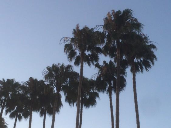 LA:Palmer