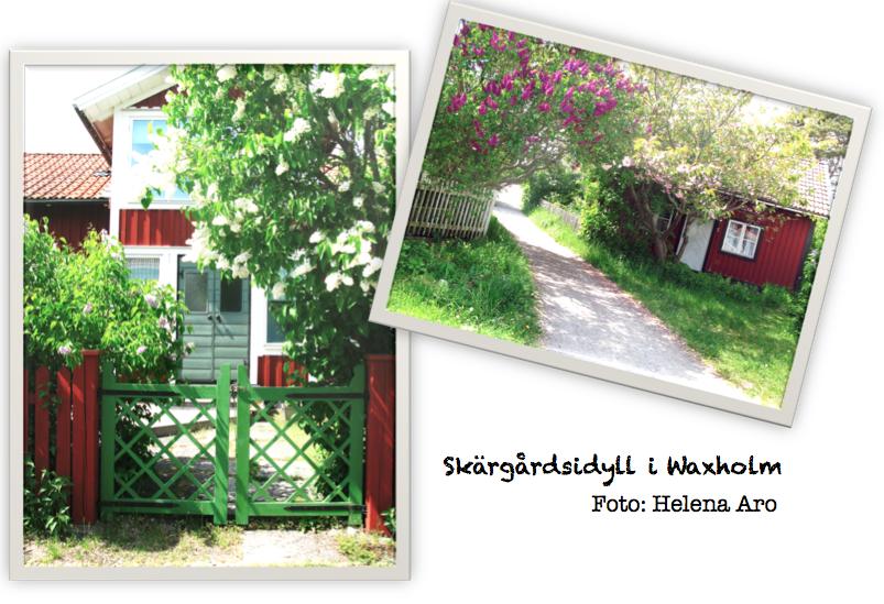 syrener, trädgård, helena aro, waxholm