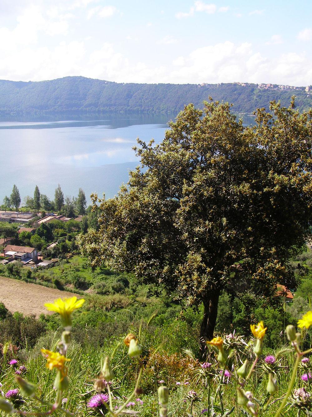 Albanosjön