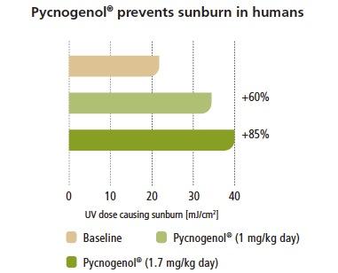 Pycnogenol visade sig också skydda huden så att den klarade av solbestrålning bättre
