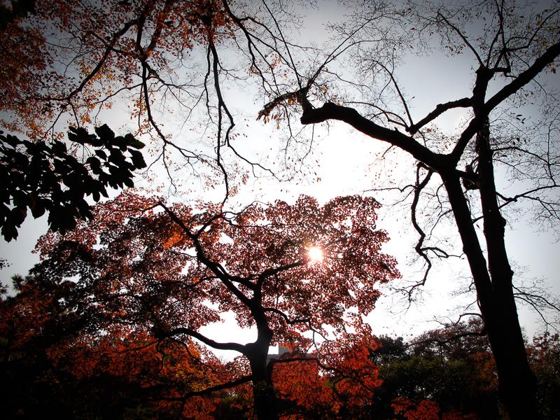 Lävverket i en park nära Roppongi i Tokyo. Foto: Agneta Elmegård