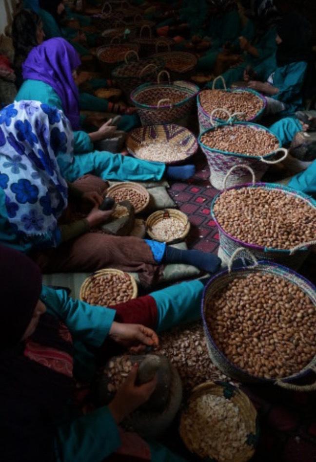 Världens mest kända kvinnokoorperativ i Marocko har ensamrätt på arganproduktionen i landet
