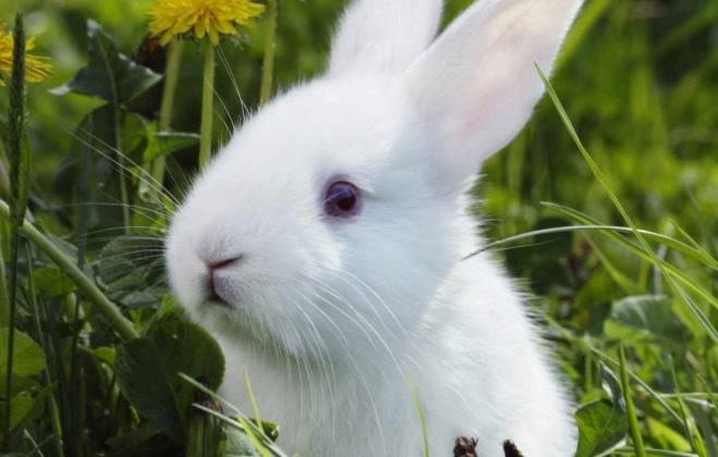 Fler och fler länder går nu med på konsumenternas krav om djurfria tester på kosmetika och hudvård. Bild från PETA