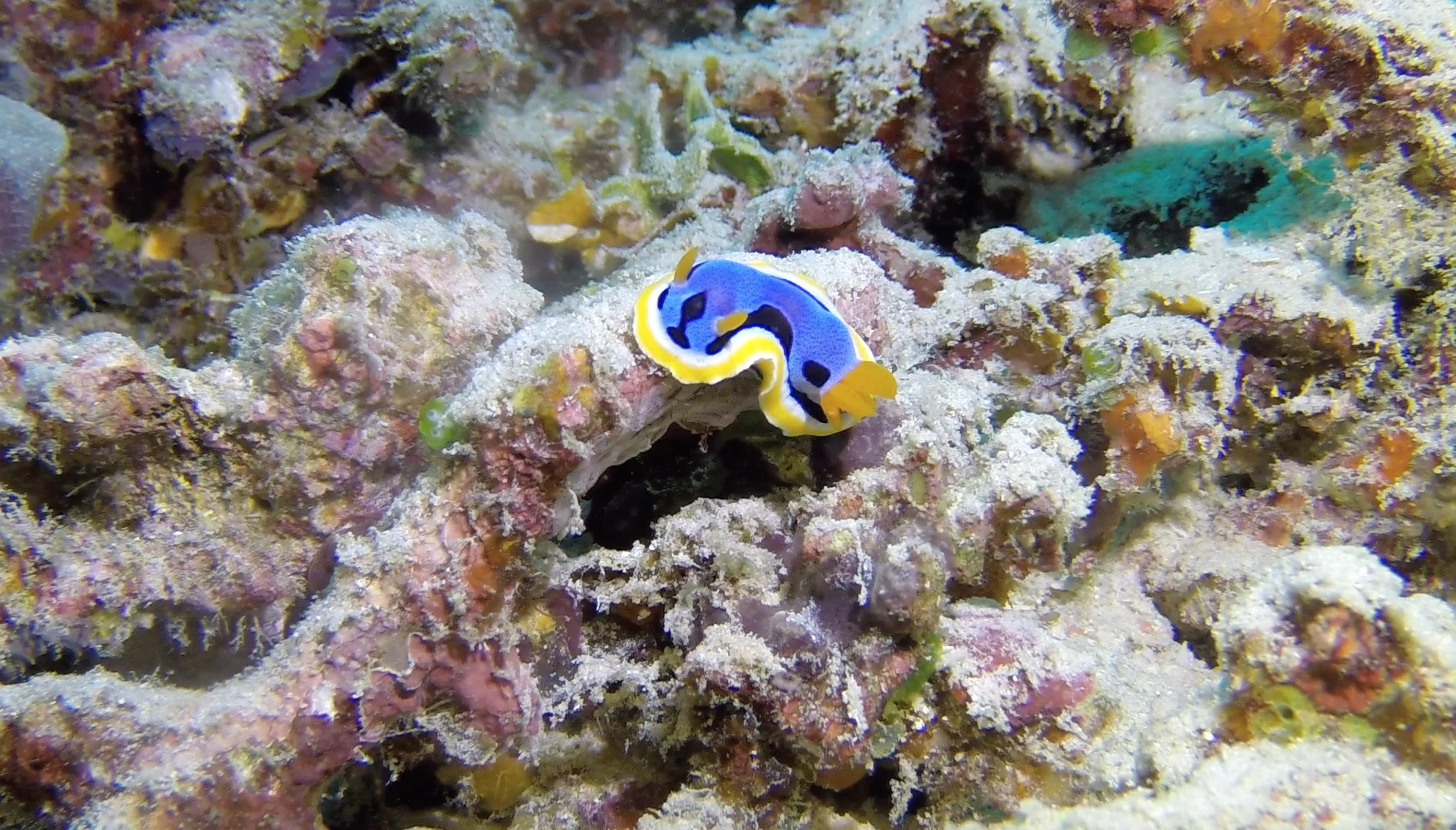 Koraller har visat sig var känsliga för den vanliga ingrediensen i solskyddsmedel Foto: Mattias Loftén