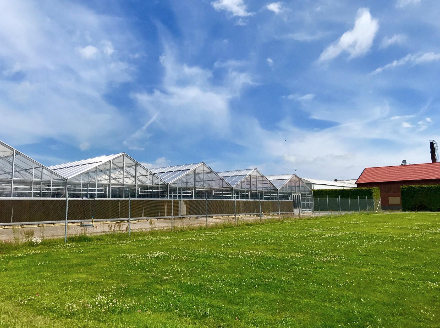I Hammenhögs tidigare odlingsväxthus håller numer Simris Alg hus.