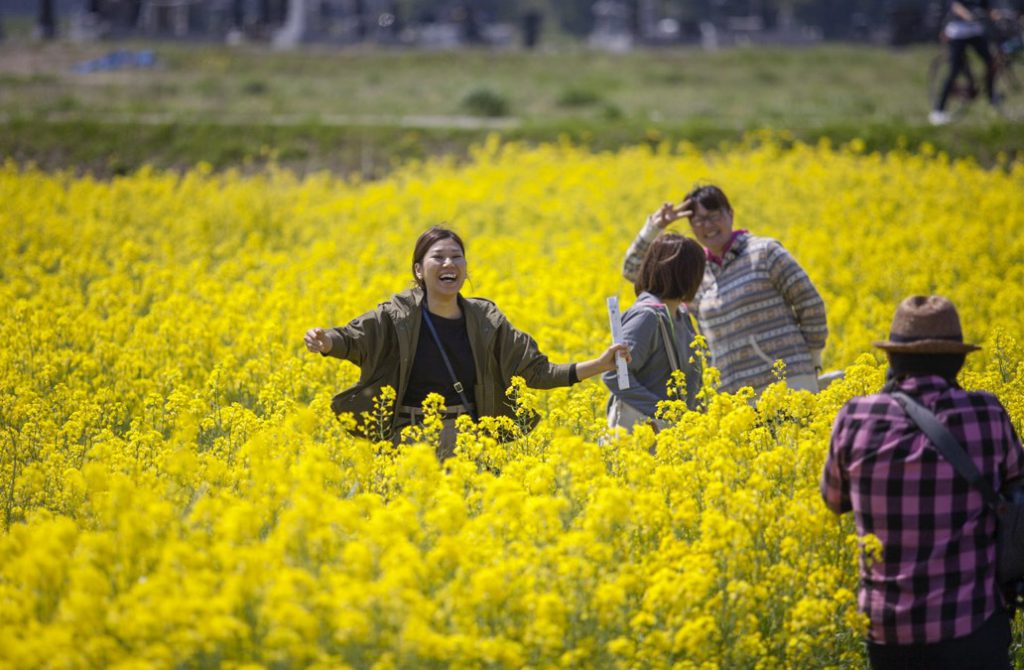 Lush köper rapsolja från det kärnkraftsdrabbade området Minamisoma som ligger tre kilometer från Fukushima