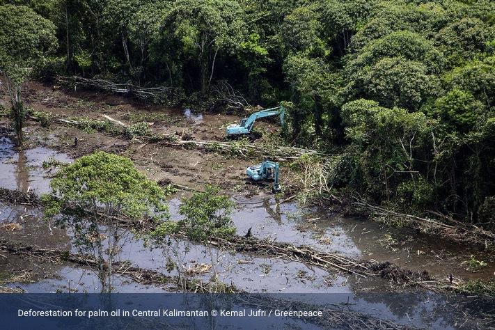 Bild lånad från Greenpeace hemsida.