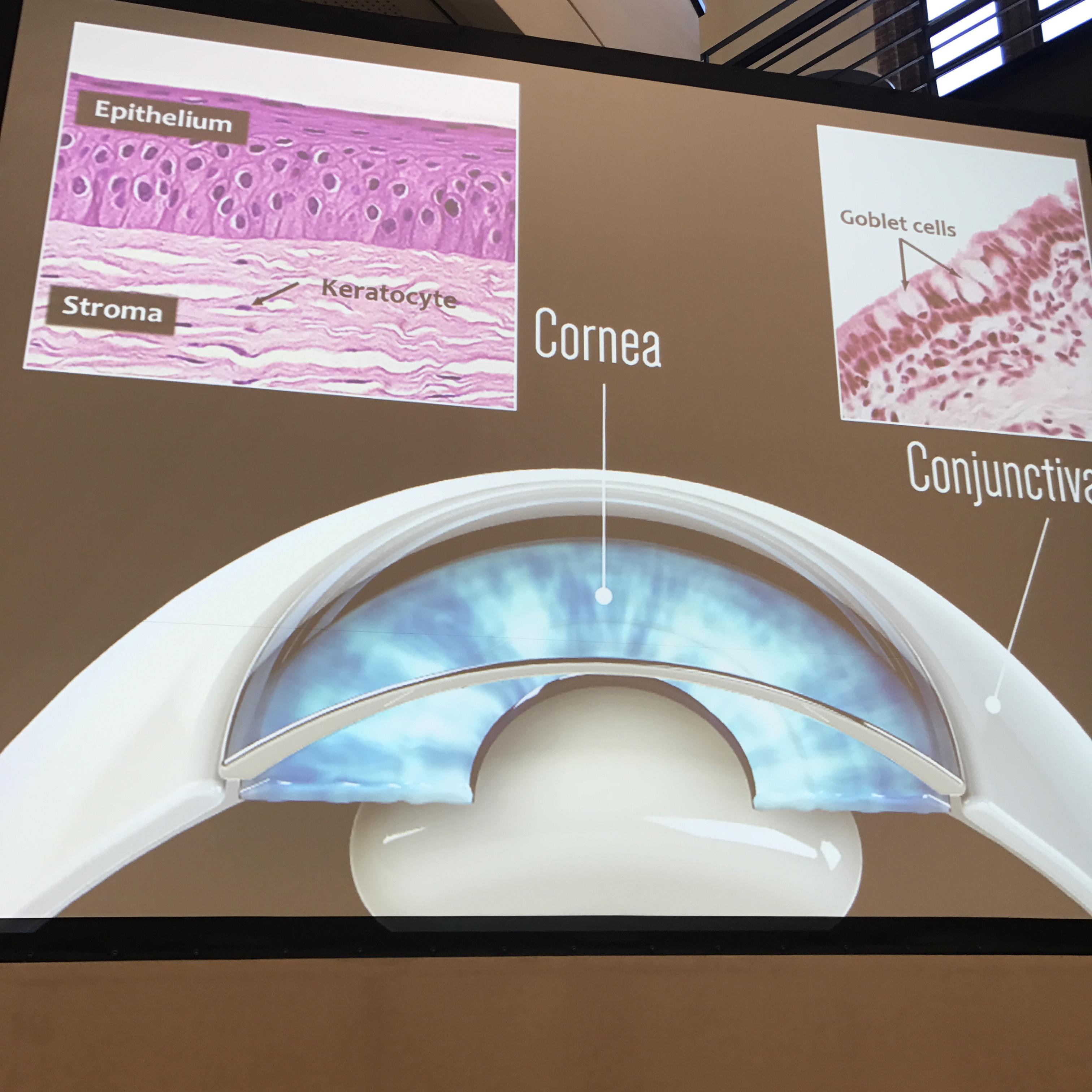"""Biolines är ett av fem forskningslabb i USA som är utvalda av NASA att skicka ut sina """"organs on a chip"""" till den internationella rymdstationen i maj 2019 för att studera vad som händer i kroppens celler under viktlöshet."""