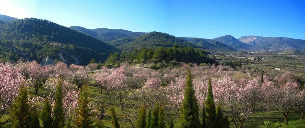 landscape-blossom.jpg.1140x481_438_0_8449