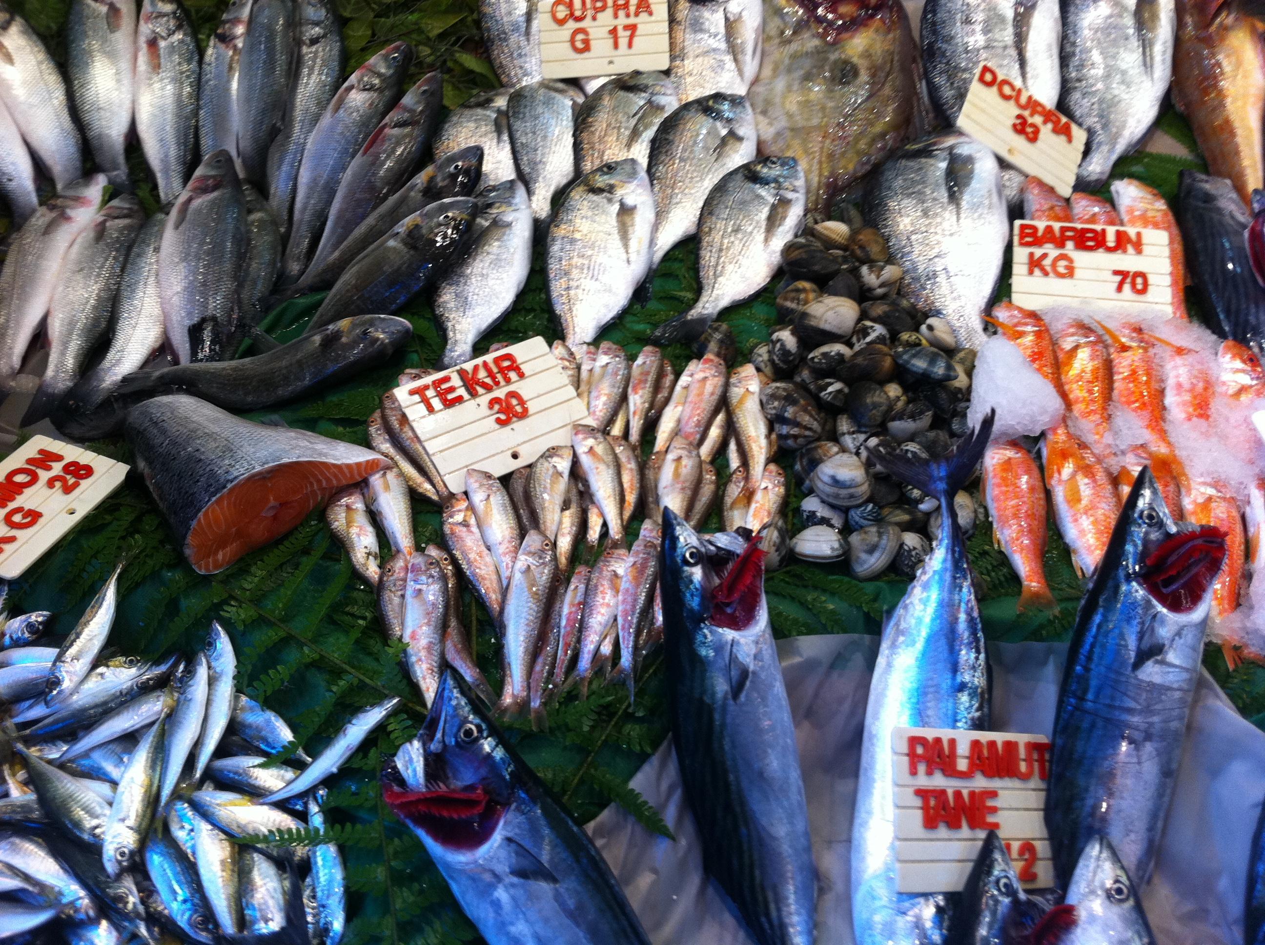 ISTANBUL. Som en pekbok för vuxna - fast man får äta fisken sen.