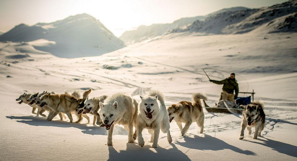 Hundspann på Grönland. Foto: Greenland.com