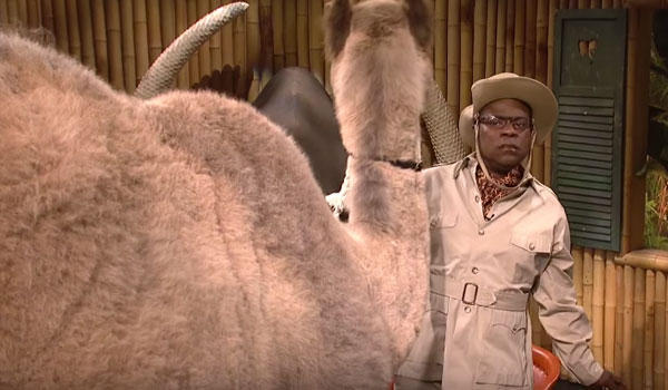 Kamelen löper amok i studion.