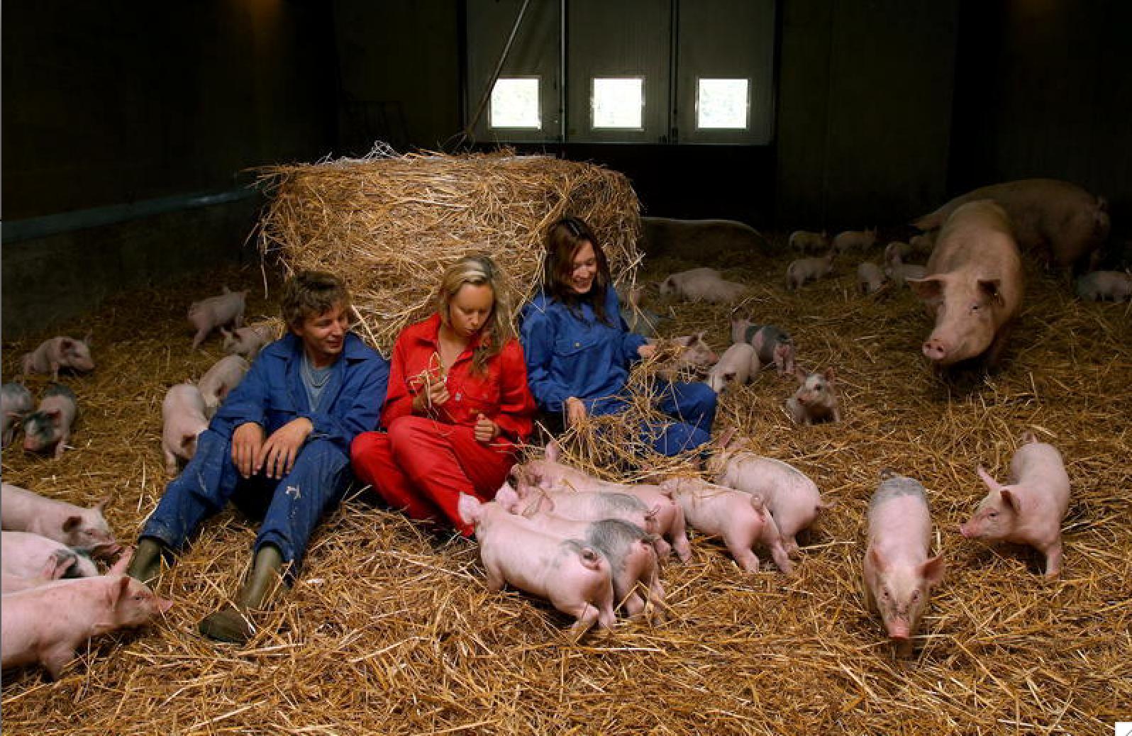 Foto: Pernilla Wahlman, när vi hälsade på hos grisbonden Karl Petter 2007.