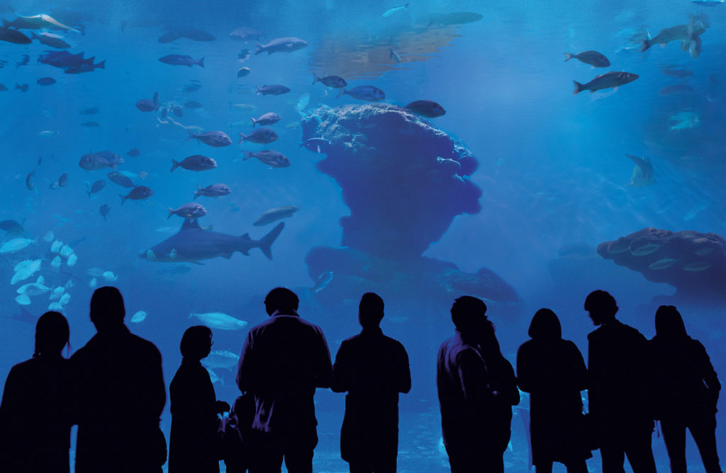 Big-Blue-1-Palma-Aquarium
