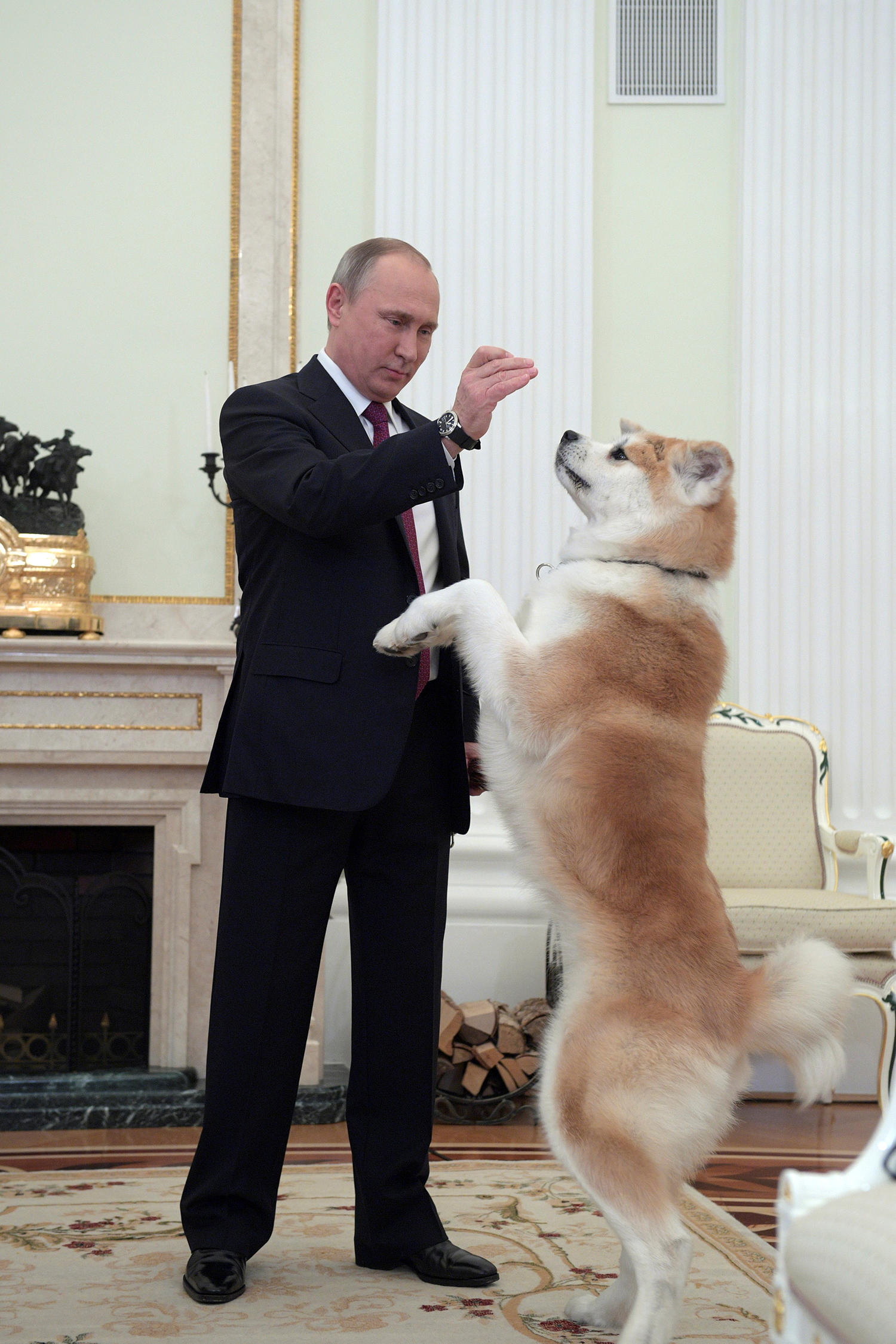 MOSCOW 2016-12-13 Russian President Vladimir Putin plays with his dog Yume, a female Akita Inu, before giving an interview to Japanese Nippon Television and Yomiuri newspaper at the Kremlin in Moscow, Russia, December 7, 2016. Picture taken December 7, 2016. Sputnik/Kremlin/Alexei Druzhinin via REUTERS ATTENTION EDITORS - THIS IMAGE WAS PROVIDED BY A THIRD PARTY. EDITORIAL USE ONLY. TPX IMAGES OF THE DAY Photo: / REUTERS / TT / kod 72000