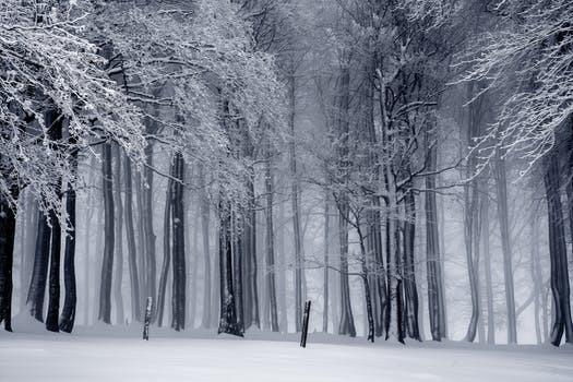 Varför inte maxa årstidens snöfall med fysisk aktivitet? Här är det mest effektiva tillvägagångssättet.